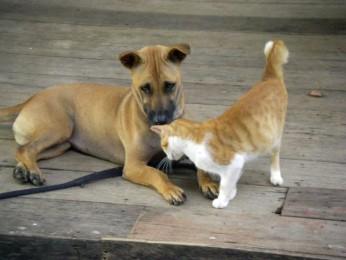 Milo & Cat